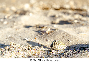small seashell on sand close up