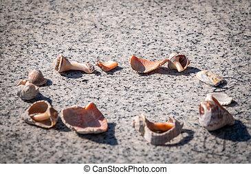 Small seashells lie on a stone slab