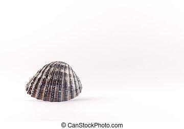 Small seashells lying on a white background