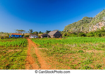 Small settlement in Vinales valley, Cub