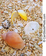 Small shells on the beach