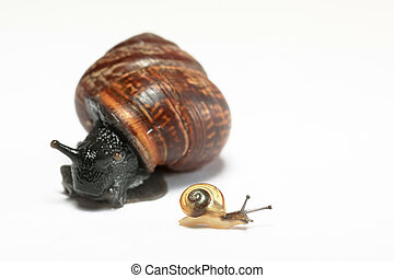 Small snail and big snail