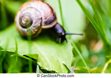 Small snail crawling on green leaf