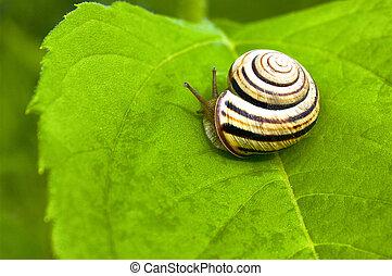 Small snail on a leaf