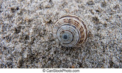 small snail on the granite