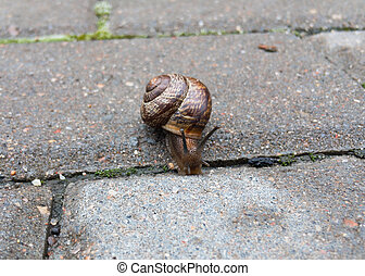 Small snail on the tile close up