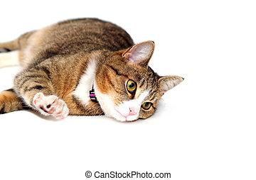 small snoopy kitty