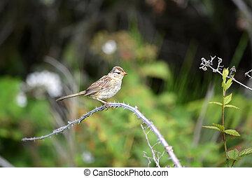 Small Sparrow bird on the tree