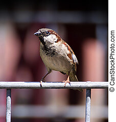 small sparrow close up