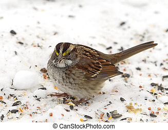 Small Sparrow in Snow