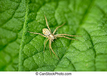 Small spider on green leaf
