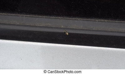 small spider sitting on the door of the car.