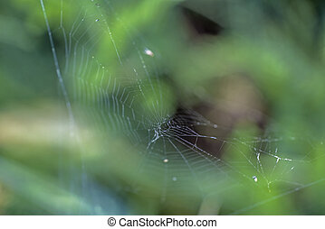Spider Web. Abstract nature photo