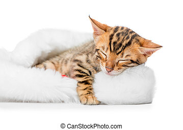 small spotted bengal sleeping in a cap of Santa Claus on a white background