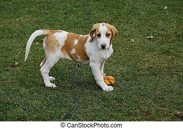 small spotty dog on a green lawn outdoors