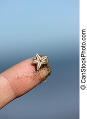 small starfish on a human finger