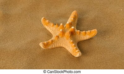 Small starfish on a sand beach, rotation, closeup