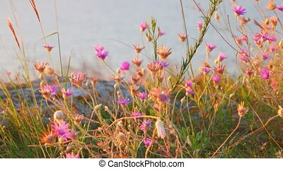 Small steppe wildflowers closeup and sea on background