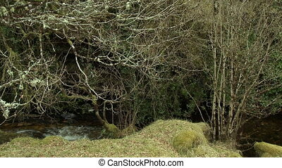 A small stream between tall, grassy banks, flowing underneath thick, stubbly, overhanging branches and bushes