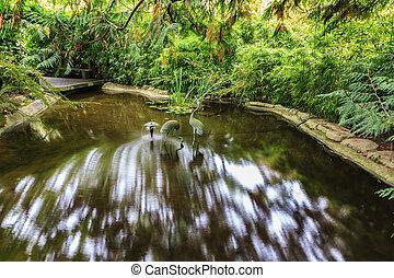 Small stream in Japanese Garden