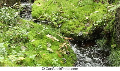 small stream in lush green forest - small winding stream in...