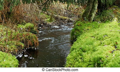 stream overgrown with green moss - small stream overgrown ...