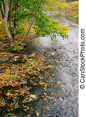 Small stream with fallen leaves by autumn time