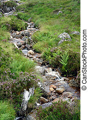 small stream with pebbles