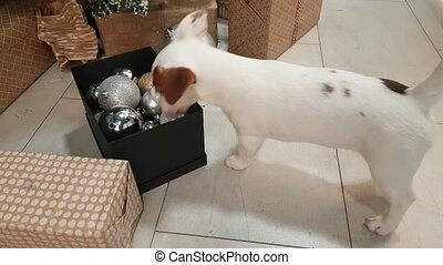 Small terrier puppy in front of xmas tree - Small terrier...