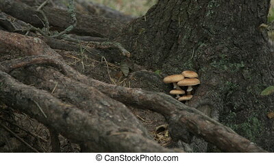 Small tiny mushrooms growing on the tree trunk.