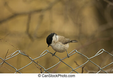 small tit bird on the fence. Europe wildlife