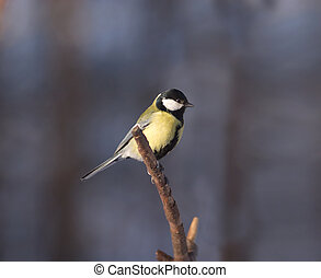 Small tit bird sits on branch