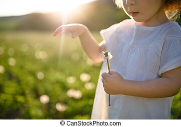 Small toddler girl standing on meadow outdoors in summer. Copy space.