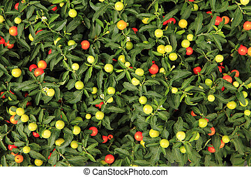 small tomato plants texture