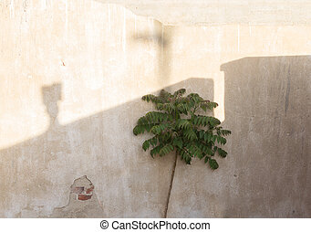 Small tree and shadows on the bright old wall