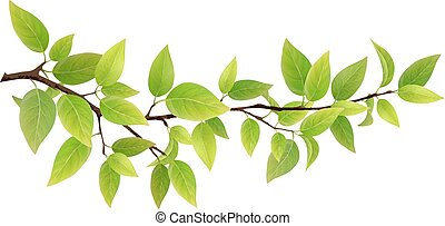 Small tree branch with green leaves