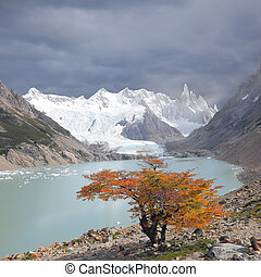 Small tree by laguna Torre. - Small tree by laguna Torre and...