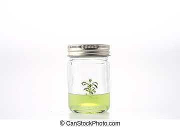 Small Tree in a bottle with green jelly