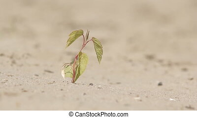 Small tree in the desert landscape