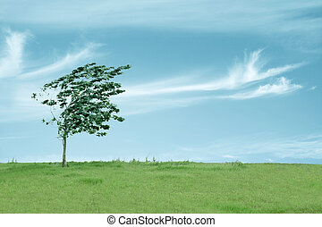 small tree in the wind