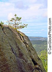 Small tree on a rocky cliff