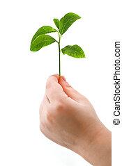 tree - small tree on child hand