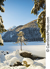 Small tree on rock near frozen lake Fusine in Italy - Small...