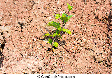 Small tree on soil