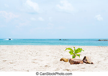 Small tree on the beach