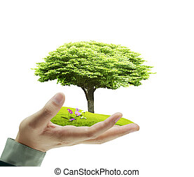 Small tree, plant in  hand