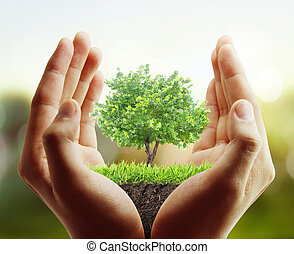 tree, plant in the hand  - Small tree, plant in the hand
