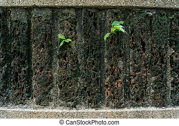 Small tree sprouting through wall