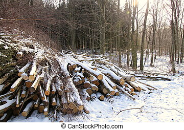 Small trees felled in the forest