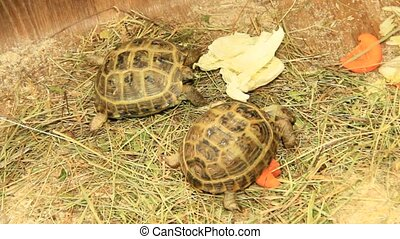 Small turtles in zoo - Small turtles living in zoo. Slow...